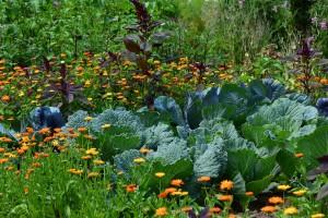 spring vegetable